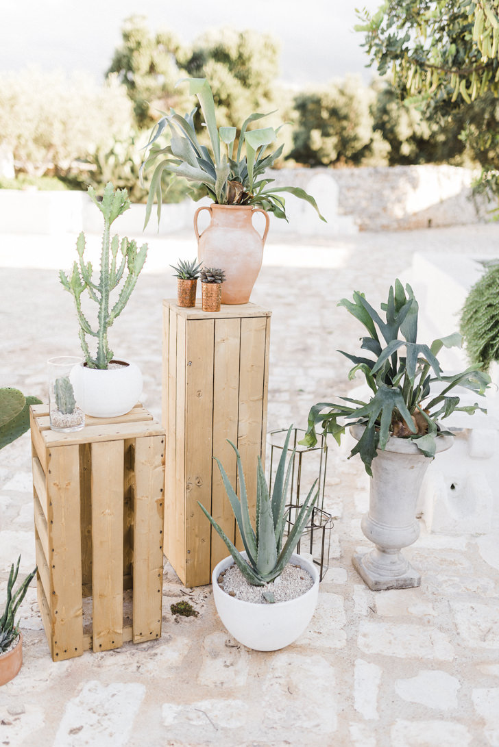 Decoration with succulents