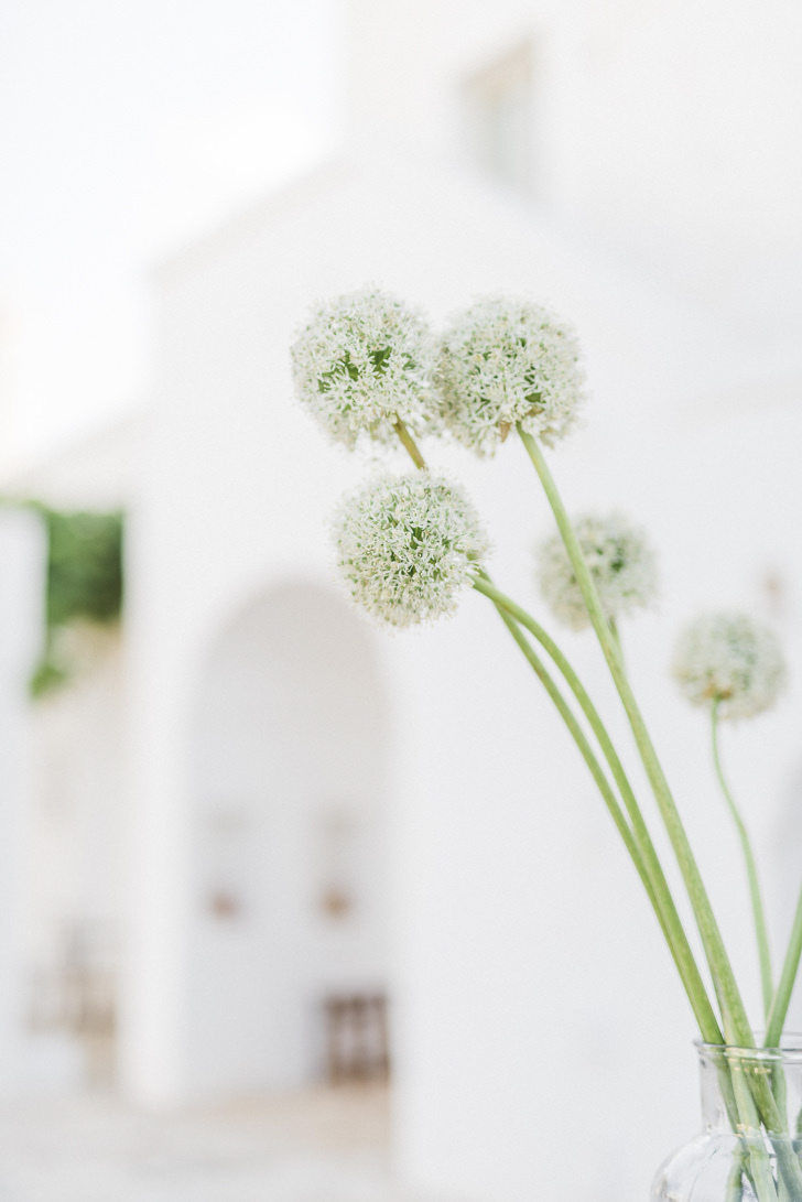 Flowers at the Masseria