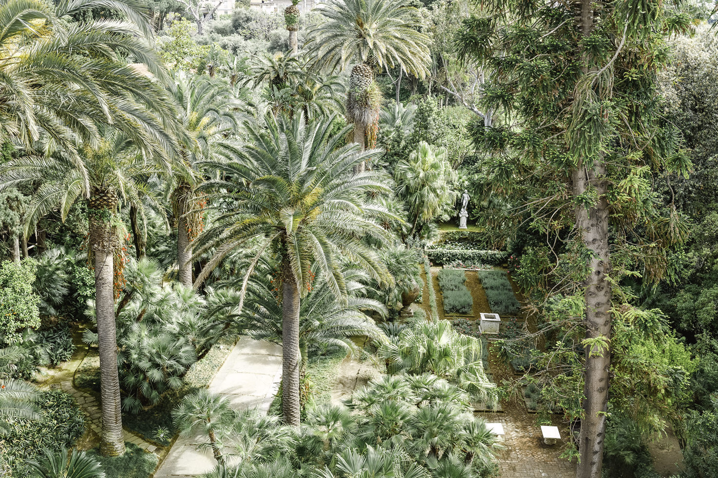 Palm trees in the gardens