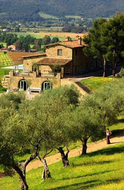 Olive grove of Estate Conti San Bonifacio in the Chianti region