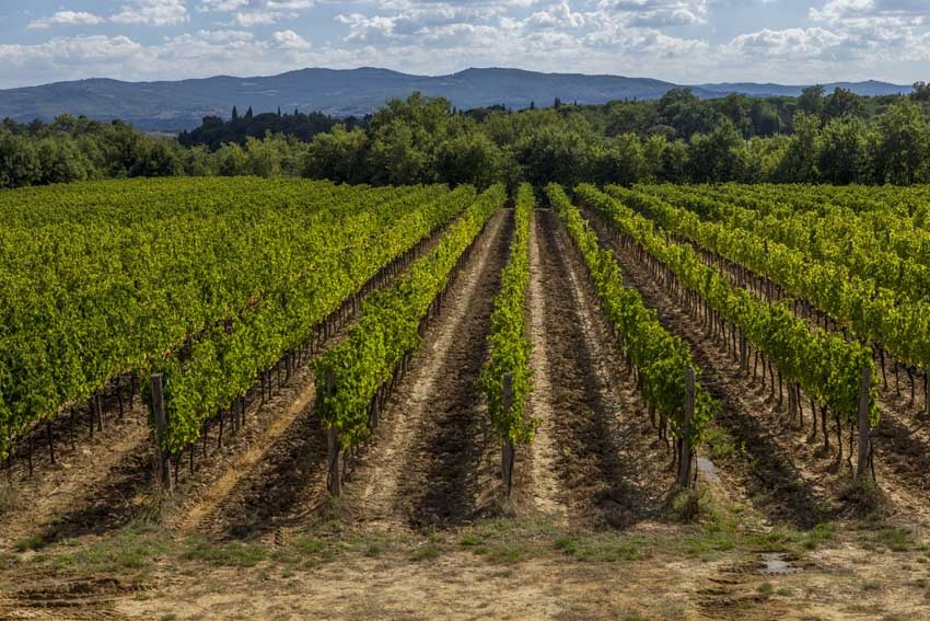 Vineyards of Restaurant of Il Borro Relais for weddings in Tuscany
